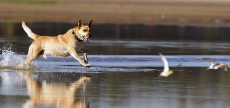 Jagdtrieb Hund