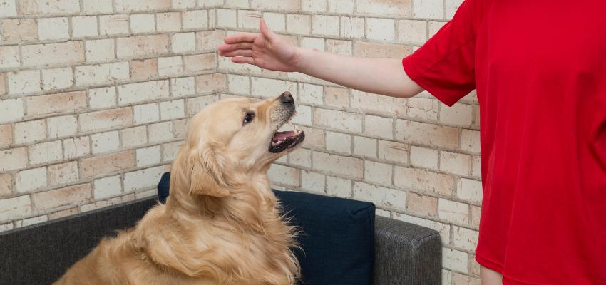 Hund zeigt Kind die Zähne
