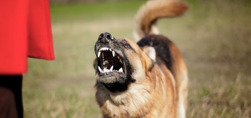Hund zeigt die Zähne