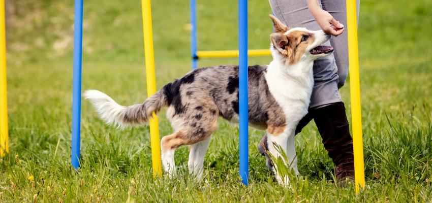 Hundesport Agility