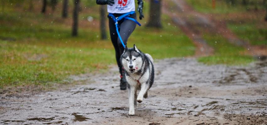 Hundesport Canicross