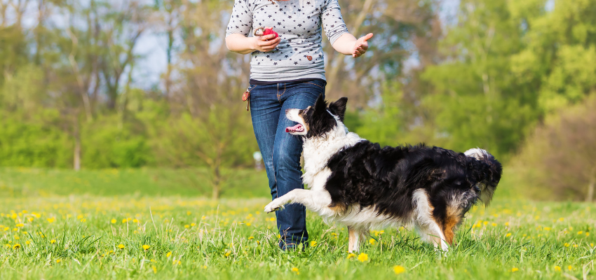 Hundesport Dog Dancing