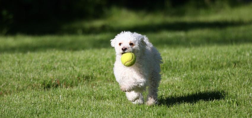 Apportieren Ball