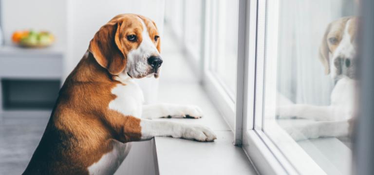 Hund wartet am Fenster