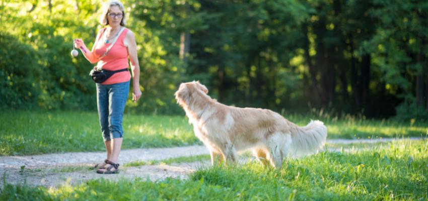 Hund beschäftigen vor dem Alleinsein